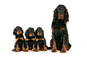 PUP 04 JD0004 01