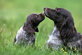 PUP 04 KH0005 01