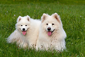 PUP 04 KH0013 01