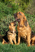 PUP 04 RC0001 02