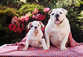PUP 04 RC0002 01