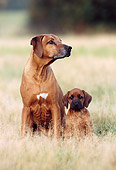 PUP 04 SS0003 01