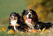 PUP 04 SS0006 01