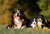 PUP 04 SS0007 01
