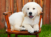 PUP 05 BK0003 01