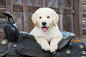 PUP 05 BK0004 01