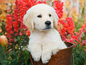 PUP 05 BK0005 01