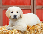 PUP 05 BK0008 01