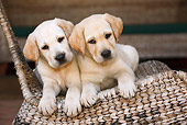 PUP 05 CB0011 01