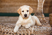 PUP 05 CB0012 01