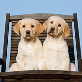 PUP 05 CB0019 01