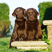 PUP 05 CB0024 01