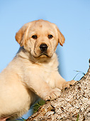 PUP 05 CB0028 01
