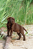 PUP 05 CE0071 01