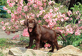 PUP 05 CE0072 01