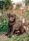 PUP 05 CE0074 01