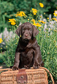 PUP 05 CE0075 01