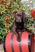 PUP 05 CE0078 01