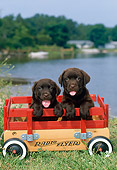 PUP 05 CE0079 01