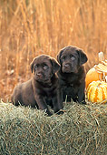 PUP 05 CE0080 01
