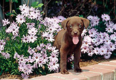 PUP 05 CE0082 01