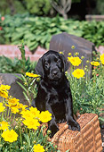 PUP 05 CE0083 01