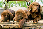 PUP 05 DB0002 01