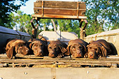 PUP 05 DB0003 01