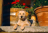 PUP 05 DB0008 01