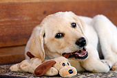 PUP 05 DB0025 01