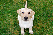 PUP 05 DB0026 01