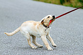 PUP 05 DB0028 01