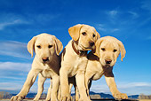 PUP 05 DS0005 01