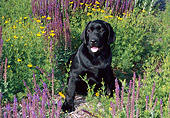 PUP 05 FA0023 01