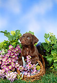PUP 05 FA0031 01