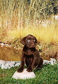 PUP 05 FA0032 01