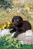PUP 05 FA0033 01