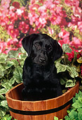 PUP 05 FA0035 01