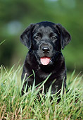 PUP 05 GR0016 03