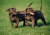 PUP 05 GR0023 11