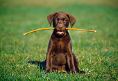 PUP 05 GR0024 01