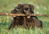 PUP 05 GR0027 01