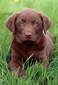 PUP 05 GR0171 01