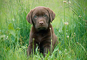 PUP 05 GR0197 01