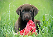 PUP 05 GR0201 01