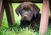 PUP 05 GR0202 01
