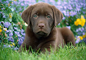 PUP 05 GR0203 01