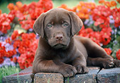 PUP 05 GR0205 01