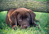 PUP 05 GR0213 01