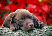 PUP 05 GR0214 01